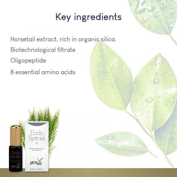 GERnétic Endo Spécial + - Key Ingredients